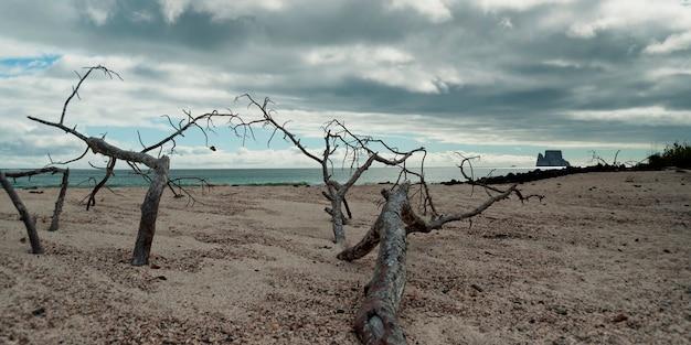 Árvores mortas na praia com kicker rock no fundo, san cristobal island, ilhas galápagos, equador Foto Premium