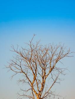 Árvores mortas no fundo do céu azul