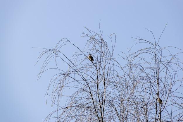 Árvores mortas sob o céu azul
