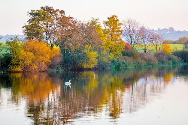 Árvores multicoloridas de outono se refletem no rio em que flutua o cisne branco.