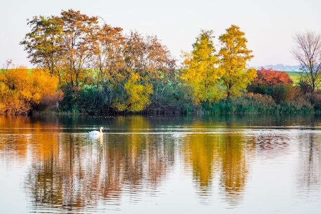 Árvores multicoloridas são exibidas na água transparente do rio no outono