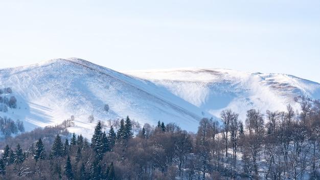 Árvores na colina no inverno, paisagem de inverno