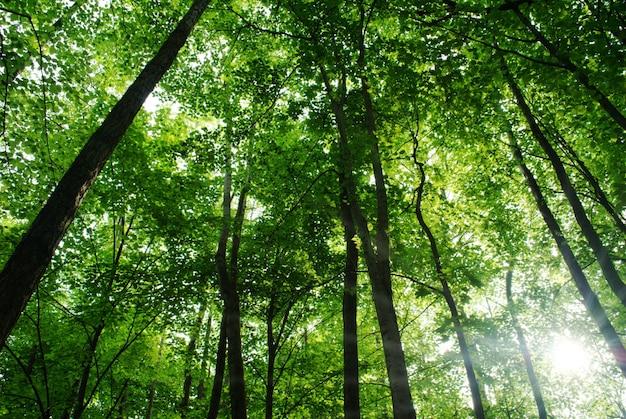 Árvores na floresta e céu azul