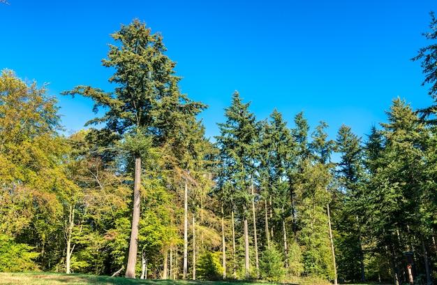 Árvores na floresta eltz, alemanha