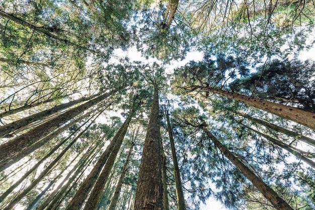 Árvores na floresta que vêem de baixo