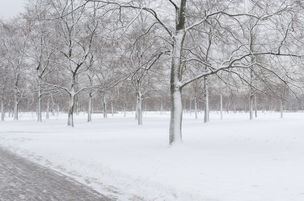 Árvores na neve no parque no inverno.
