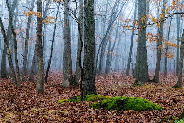 Árvores na névoa do outono