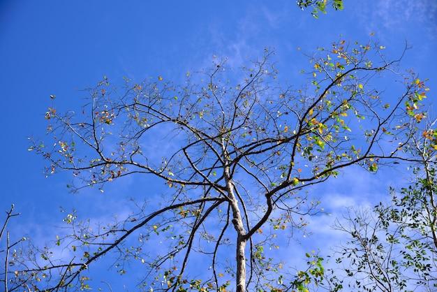 Árvores na primavera no fundo do céu azul
