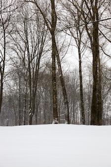 Árvores na temporada de inverno na floresta