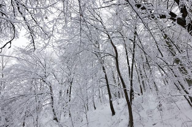 Árvores na temporada de inverno no território do parque