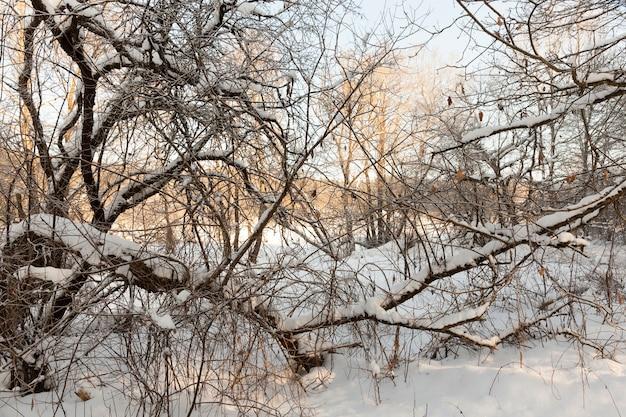 Árvores na temporada de inverno Foto Premium