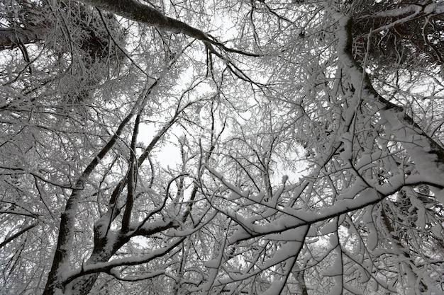 Árvores na temporada de inverno