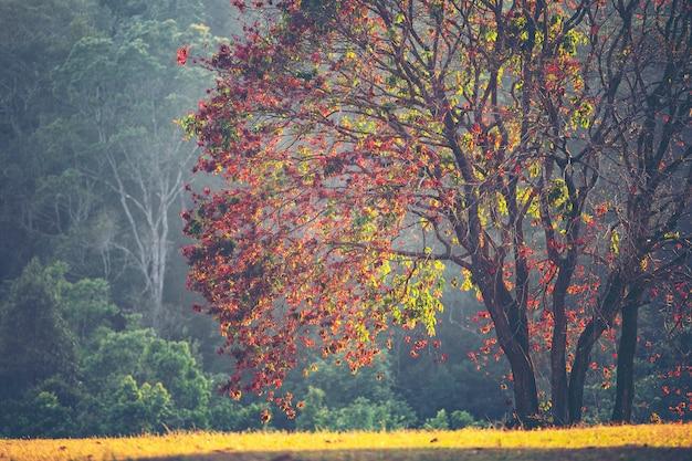 Árvores na temporada de outono, floresta tropical