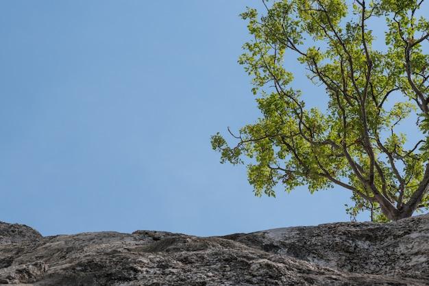 Árvores nas falésias, grandes montanhas