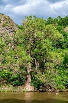 Árvores nas margens do rio kura, natureza.