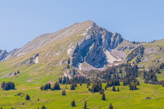Árvores nas montanhas dos alpes suíços, suíça
