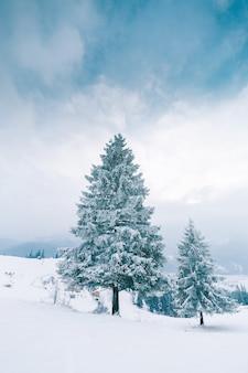 Árvores nas montanhas. montanhas de inverno