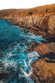 Árvores nas rochas com ondas do mar