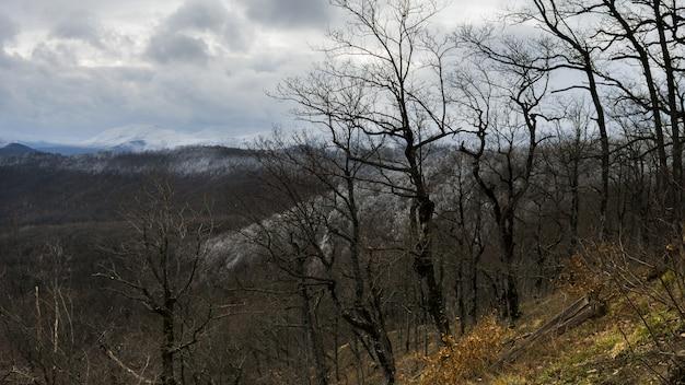 Árvores no alto das montanhas de inverno sem folhas