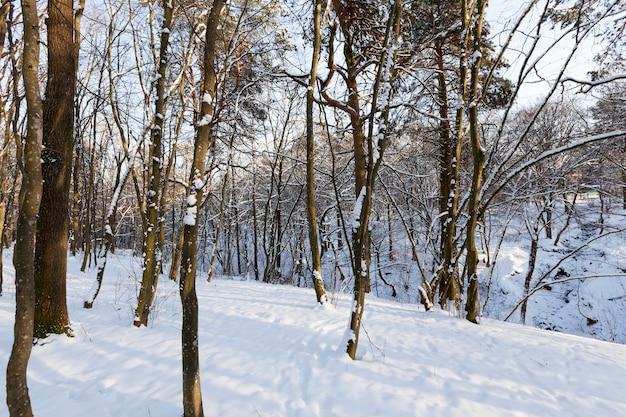 Árvores no inverno Foto Premium
