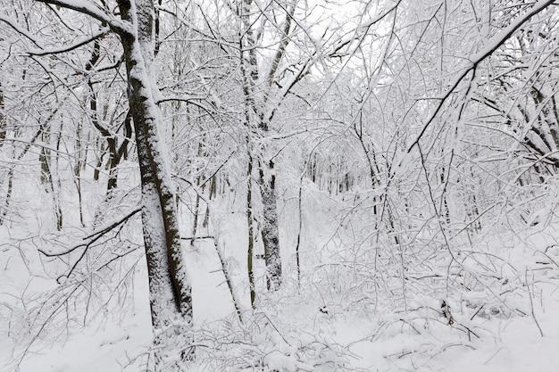 Árvores no inverno
