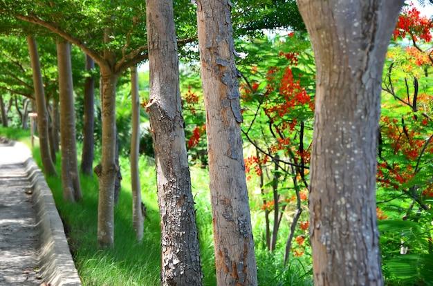 Árvores no jardim