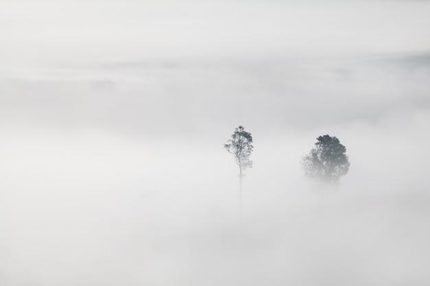 Árvores no nevoeiro