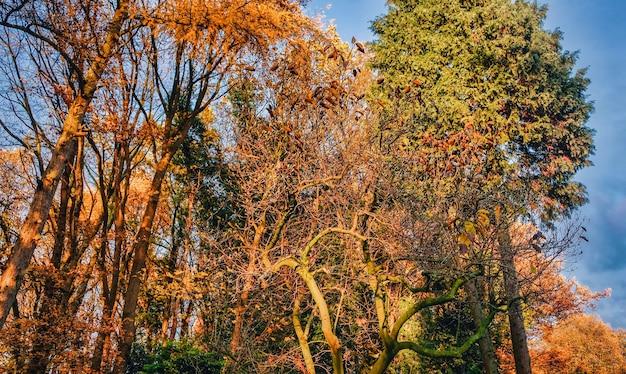 Árvores no outono contra um céu holandês nublado