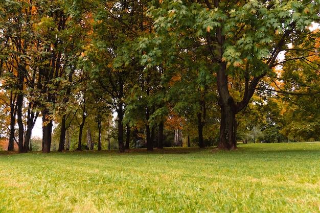 Árvores no parque da cidade de outono