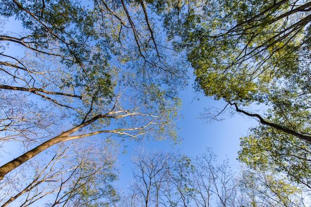 Árvores no parque da cidade de ribeirão preto, também conhecido como parque curupira