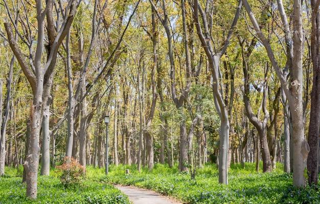 Árvores no parque do castelo de osaka