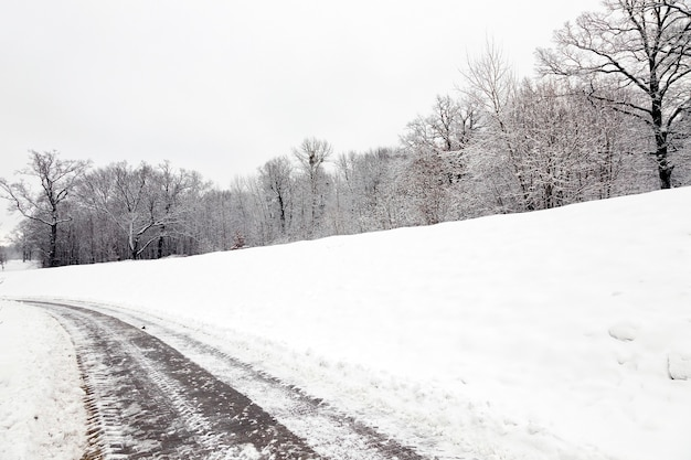 Árvores no parque no inverno. o chão está coberto de neve.