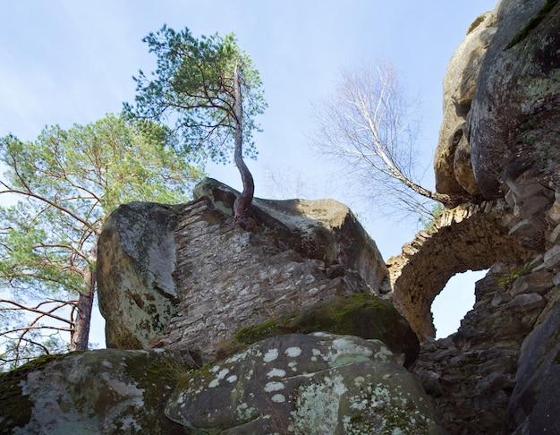 Árvores no topo das rochas no fundo do céu azul (