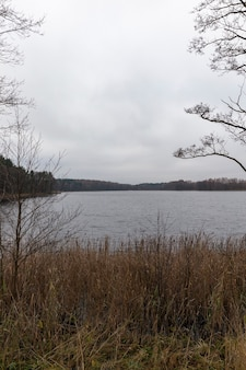 Árvores nuas, grama seca crescendo na margem do lago, paisagem escura e sombria do outono, fotografada em tempo nublado