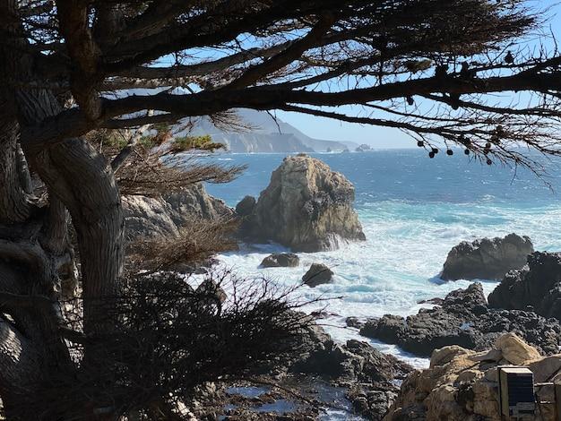 Árvores nuas marrons perto do corpo de água durante o dia