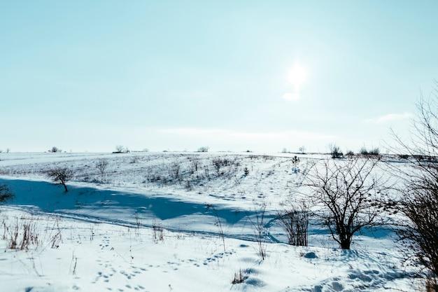 Árvores nuas na paisagem de montanha nevado contra o céu azul