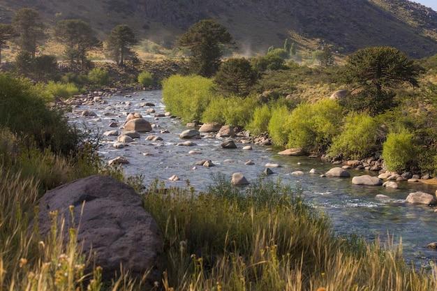 Árvores pehuen no rio da patagônia