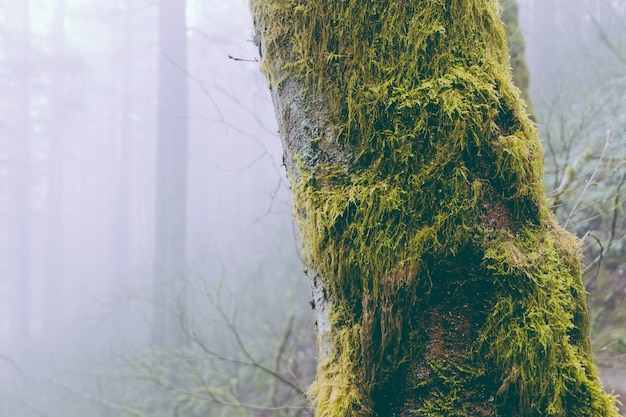 Árvores peludas