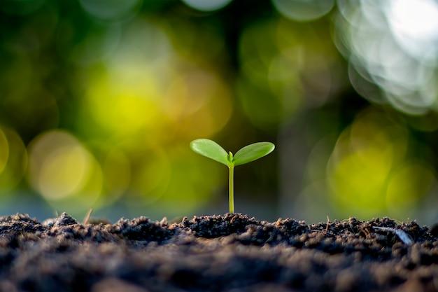 Árvores pequenas com folhas verdes, crescimento natural e luz solar, conceito de agricultura e crescimento sustentável das plantas.