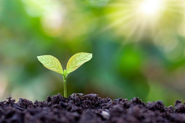 Árvores pequenas com folhas verdes, crescimento natural e luz solar, o conceito de agricultura e crescimento sustentável das plantas.