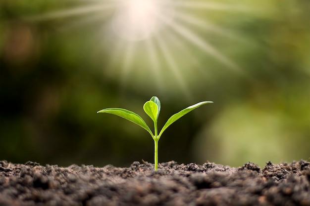Árvores pequenas com folhas verdes, crescimento natural e luz solar, o conceito de agricultura e o crescimento sustentável das plantas.