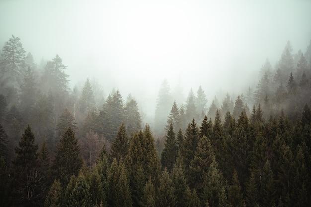 Árvores próximas umas das outras na floresta coberta pela névoa rasteira