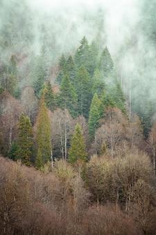 Árvores próximas umas das outras na floresta cobertas pela névoa rasteira