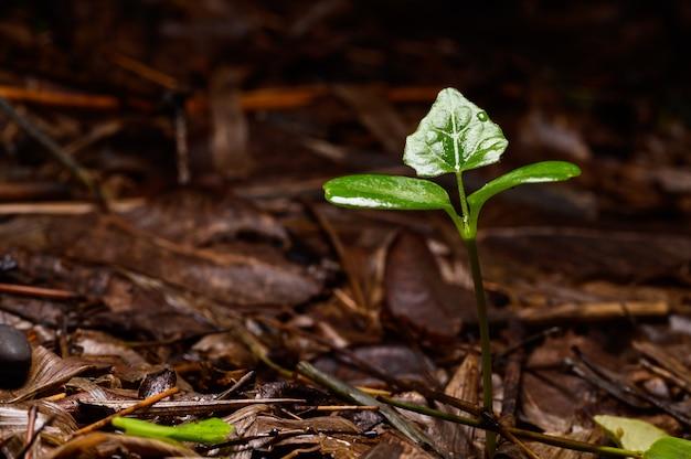 Árvores que crescem na floresta natural