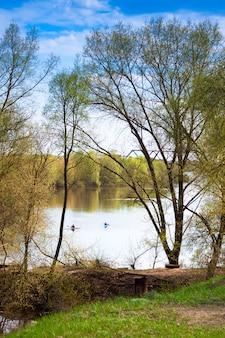 Árvores que crescem nas margens do rio