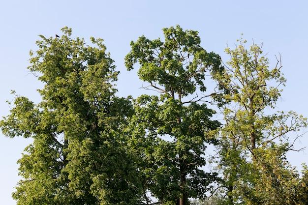 Árvores que crescem nas proximidades no verão