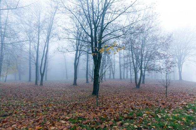 Árvores que crescem no parque na temporada de outono em meio a uma pequena neblina, a folhagem de um bordo caída no chão e os troncos escuros das plantas