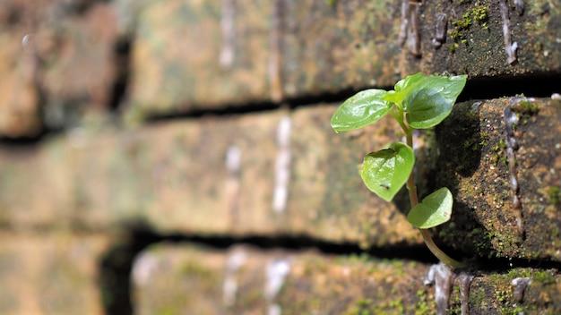 Árvores que crescem no tijolo