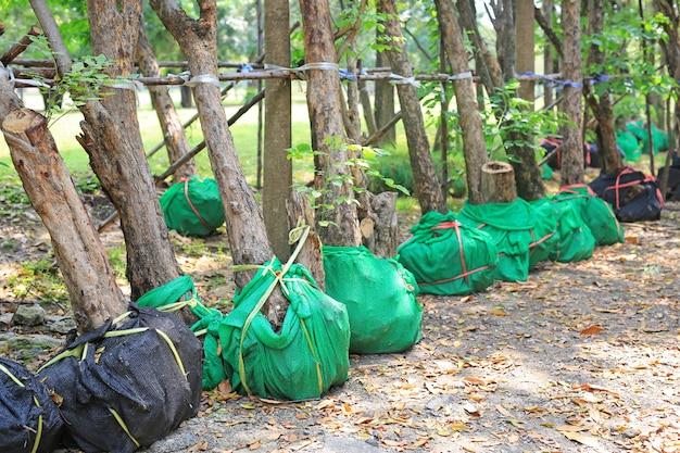 Árvores que esperam a plantação no jardim. enrole a raiz para reduzir a falta de água.