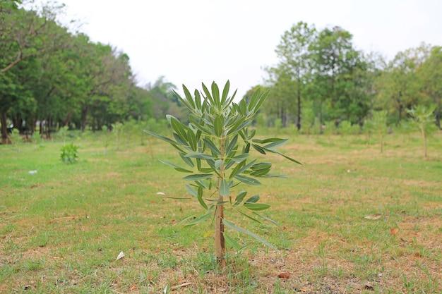 Árvores recém-plantadas em uma fileira no jardim